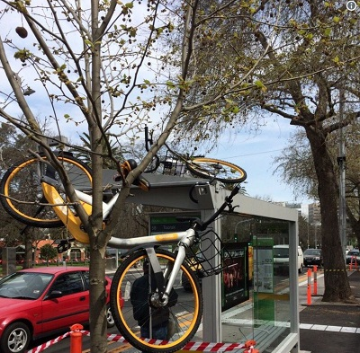 oBike stuck in tree