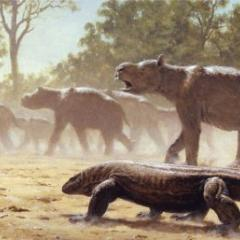 Diprotodon undertaking mass migration, while being observed by a giant lizard (Megalania) and giant grey kangaroos. Credit: Laurie Beirne