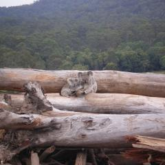 The first comprehensive list of the threats to Australia's most endangered plants and animals reveals blunt news about the future for some of the country's favourite species.  The University of Queensland-led study has compiled a data set, listing the threats to Australian species from habitat loss, fragmentation, and degradation.